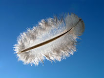 Flight to a feather. Stock Photo