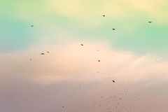 A flock of migratory birds in the sky. Royalty Free Stock Photos