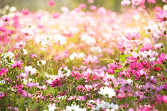Floral backgrounds Stock Photo