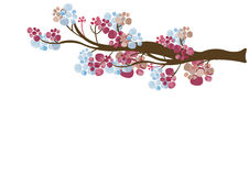 Floral tree branch Royalty Free Stock Photo