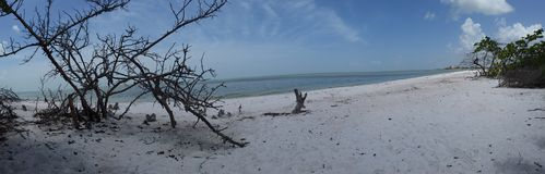 Florida sikter Arkivfoton