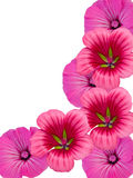 Flower ornament Royalty Free Stock Images