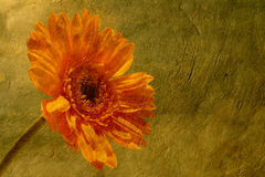 Flower on paper Royalty Free Stock Photos