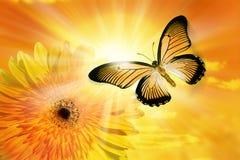 Flower Sun Sky Butterfly Stock Photos