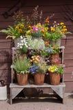 Flowers Arrangement Stock Photo
