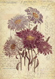 Flowers Botanical Vintage Style Wall Art with Textured Background Royalty Free Stock Photos