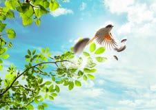 The flying bird Stock Photo