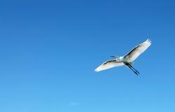 Flying heron bird Royalty Free Stock Photos