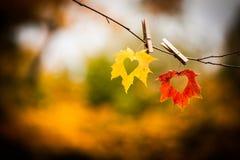 Fogli di autunno con i cuori Immagini Stock Libere da Diritti