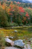 Fogliame di caduta, Acadia Fotografia Stock