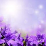 Fondo astratto della molla con i fiori porpora Fotografia Stock