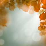 Fondo astratto di autunno, uguagliante luce Immagine Stock