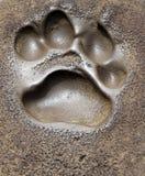 Foot Print Stock Image