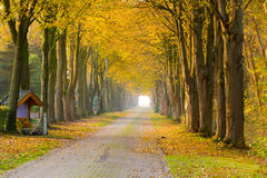 Forest away in autumn Royalty Free Stock Images