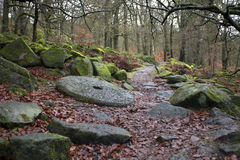 Forest path in autumn Stock Image
