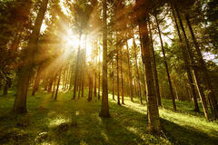 Forest sunny Stock Images