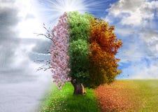 Four season tree, photo manipulation Royalty Free Stock Images