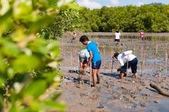 Freiwillige Betriebsjunge Mangrovenbäume an den Sümpfen nahe gelegenes Saphan Stockbilder