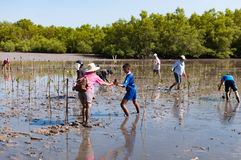 Freiwillige Betriebsjunge Mangrovenbäume an den Sümpfen nahe gelegenes Saphan Lizenzfreie Stockbilder