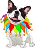 French bulldog wearing a colorful collar Stock Photography