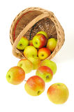 Fresh apples spilling out of basket - isolated on Stock Images