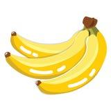 Fresh Banana Fruit Royalty Free Stock Photo