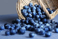 Fresh blueberries spilling from wicker basket Royalty Free Stock Photos