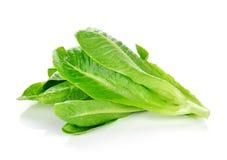 Fresh Cos Lettuce Royalty Free Stock Photos