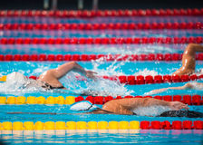 Frestyle swimming race Royalty Free Stock Photography
