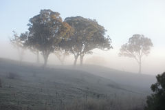 Frost and Fog Stock Photos