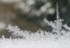 Frost paints Stock Images