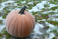 Frost on Pumpkin Stock Image