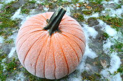 Frost on Pumpkin Royalty Free Stock Photo