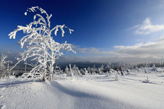 Frost on trees - Bohemian Forest. Sumava. Czech Royalty Free Stock Images