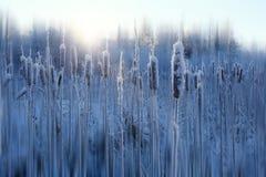 Frost  winter snow Stock Photo