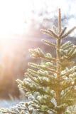 Frosty christmas tree outside Stock Photo