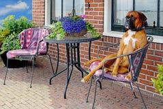 Funny dog Royalty Free Stock Photography