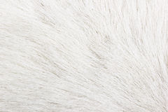 Fur Royalty Free Stock Photos