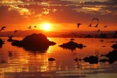 Gabbiani che volano sopra il mono lago durante l'alba Immagini Stock Libere da Diritti