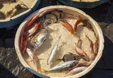 Gammal traditionell marknad av den nya fisken Royaltyfria Foton