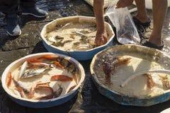 Gammal traditionell marknad av den nya fisken Arkivfoton