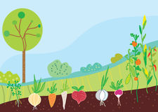 Garden in spring with vegetables Stock Image