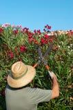 Gardener pruning Royalty Free Stock Image