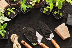 Gardening tools and plants Royalty Free Stock Photos