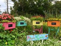 Garten-Schönheit Lizenzfreies Stockfoto