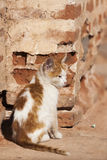 Gato da rua em C4marraquexe Fotos de Stock