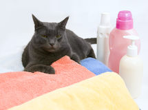 Gato na lavanderia colorida a lavar Fotos de Stock