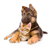 German shepherd puppy dog embracing little bengal cat. isolated Stock Photography
