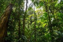 Giungla densa verde Fotografie Stock