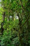 Giungla densa verde Fotografia Stock